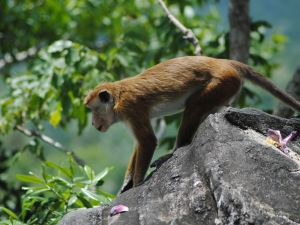 Monkey 0