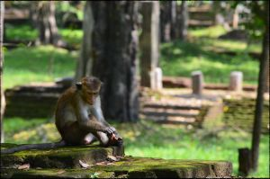 Sri-lanka-ancient-ruins-monkeys-1