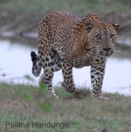 ph leopard rz2