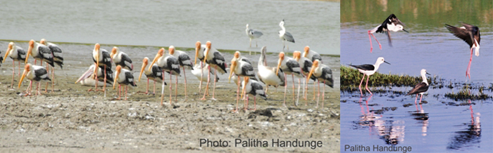ph painted storks rz2