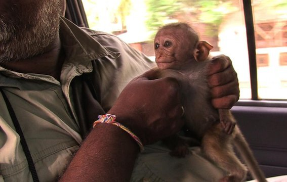 sunil rescue rejected orphan trim