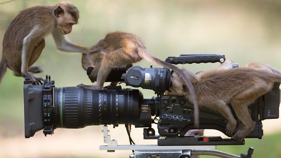 DittusQA_Macaquesinvestigatefilmcamera
